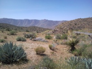 Anza-Borrego Desert is a part of the Colorado & Sonoran Desert areas