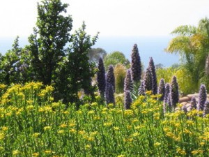 The Quail Botanical Gardens overlooks the Pacific Ocean and the #1 Floriculture Producing Region in the Country