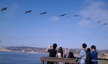 Guests watching brown pelicans fly by in formation from a wooden platform overlooking the Pacific Ocean