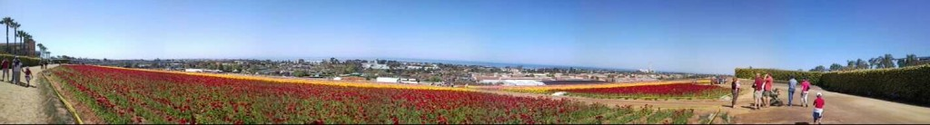 flower-fields-panorama