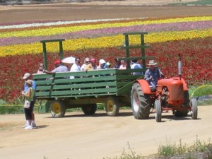 flower-fields-wagon