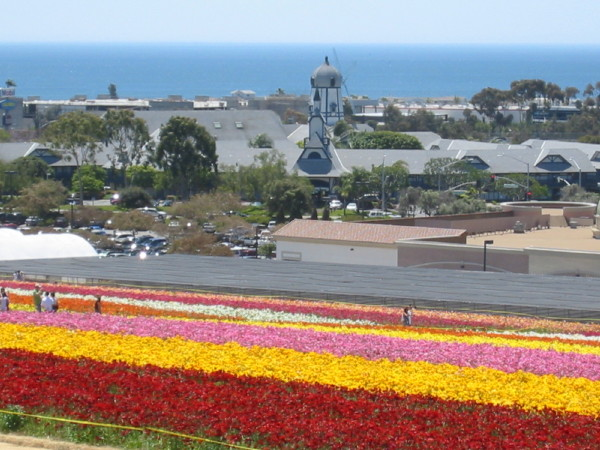 Beau Highlights For The Carlsbad Flower Fields: ...