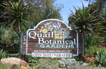 Amazing Quail Botanical Gardens Highlights For The San Diego ...