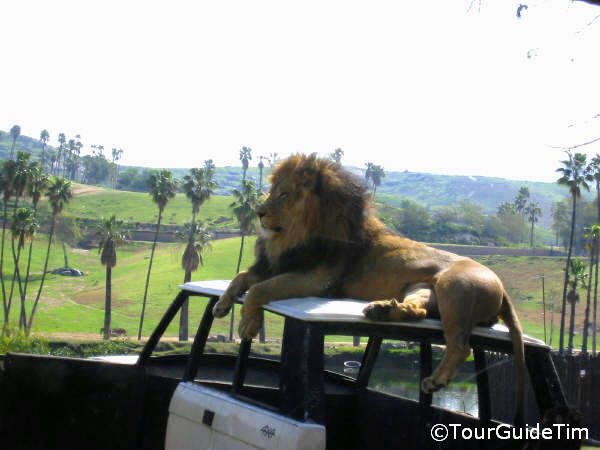 Can You Bring Food Into San Diego Safari Park